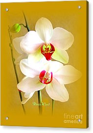 White Orchids Acrylic Print by Doris Wood