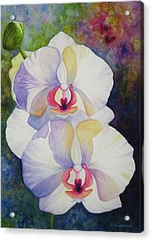 White Orchids Acrylic Print by Kerri Ligatich