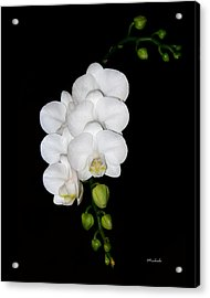 White Orchids On Black Acrylic Print