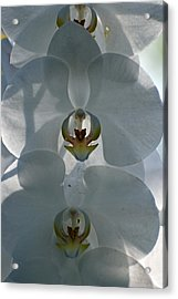 Acrylic Print featuring the photograph White Orchids  by Teresa Blanton