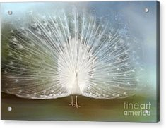 Acrylic Print featuring the photograph White Peacock In All His Glory by Bonnie Barry