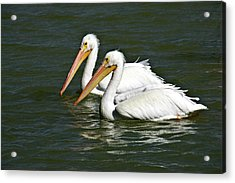 White Pelicans Acrylic Print by Rodney Cammauf