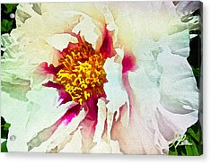 Acrylic Print featuring the painting White Peony by Joan Reese
