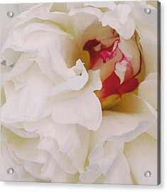 White Petals Acrylic Print by Michael Peychich