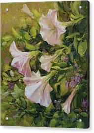 White Petunias Acrylic Print by Tracie Thompson