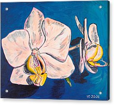 White Phalaenopsis Orchids Acrylic Print by Valerie Ornstein