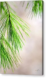 Acrylic Print featuring the photograph White Pine Branch by Christina Rollo