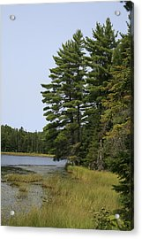 White Pines Acrylic Print by Alan Rutherford