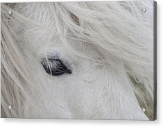 White Pony Acrylic Print