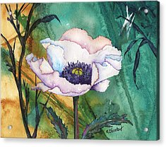 White Poppy On Teal Acrylic Print by Renee Chastant