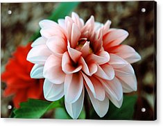 White Red Flower Acrylic Print