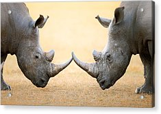 White Rhinoceros  Head To Head Acrylic Print by Johan Swanepoel