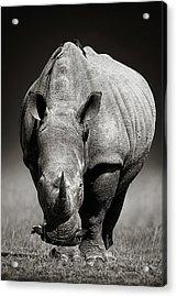 White Rhinoceros  In Due-tone Acrylic Print