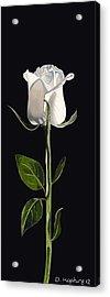 White Rose Acrylic Print by Darrell Hopkins