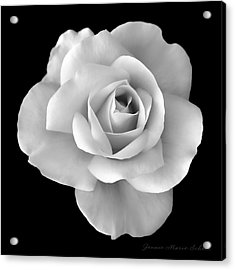 White Rose Flower In Black And White Acrylic Print