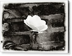 White Rose In Black And White Acrylic Print by Bill Cannon
