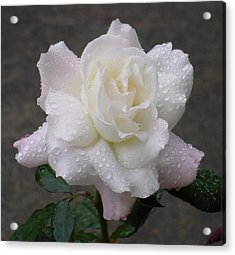 White Rose In Rain - 3 Acrylic Print by Shirley Heyn