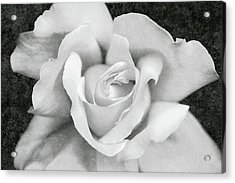 Acrylic Print featuring the photograph White Rose Macro Black And White by Jennie Marie Schell