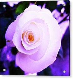 White Rose Acrylic Print by Mary Ellen Frazee
