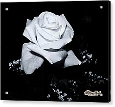 Acrylic Print featuring the photograph White Rose N Babies Breath by William Havle