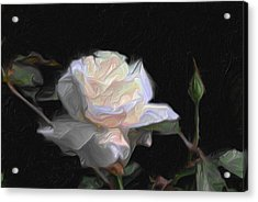 White Rose Painting Acrylic Print