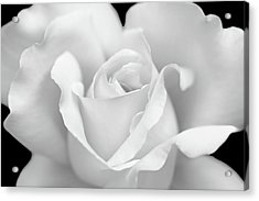 Acrylic Print featuring the photograph White Rose Purity by Jennie Marie Schell