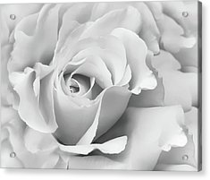 Acrylic Print featuring the photograph White Rose Ruffles Monochrome by Jennie Marie Schell