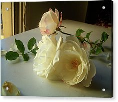 White Roses In Afternoon Light Acrylic Print