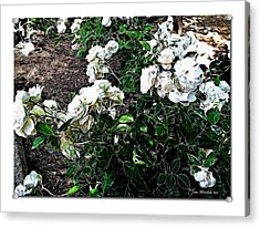 Acrylic Print featuring the photograph White Roses by Joan  Minchak