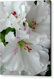 Acrylic Print featuring the photograph White Ruffles by Marilynne Bull