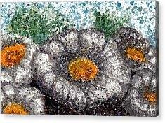White Saguaro Cactus Blossom Acrylic Print by Cynthia Ann Swan