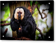 Acrylic Print featuring the photograph White Saki by The 3 Cats
