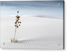 White Sands Acrylic Print by Mike Irwin
