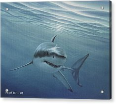White Shark Acrylic Print by Angel Ortiz