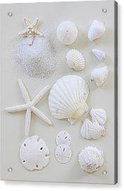 White Shells Acrylic Print by Daniel Hurst Photography