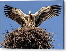 White Storks Of Fagagna 7 Acrylic Print