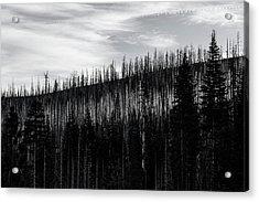 White Stripe Acrylic Print