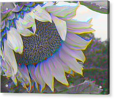 White Sunflower Acrylic Print by Vicky Brago-Mitchell