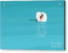 White Swan Blue Lake Acrylic Print