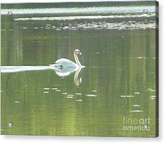 White Swan Silhouette Acrylic Print