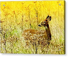 White Tail Doe On Alert Acrylic Print
