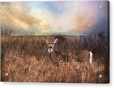 Acrylic Print featuring the photograph White Tail by Robin-Lee Vieira