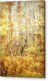Acrylic Print featuring the digital art White-tail Woods by Barry Jones