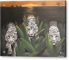 White Tiger Encounter Acrylic Print