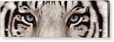White Tiger Eyes Acrylic Print