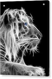 Acrylic Print featuring the photograph White Tiger by Shane Bechler