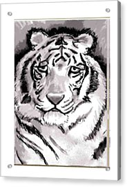 White Tiger Acrylic Print by Terry Groehler