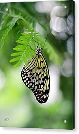 White Tree Nymph Butterfly 2 Acrylic Print by Marie Hicks
