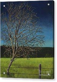 White Tree Of Worden Acrylic Print