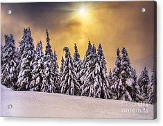 White Trees Acrylic Print by Alessandro Giorgi Art Photography